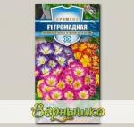 Примула Громадная F1, Смесь, 5 шт. Русский богатырь