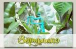 Подвязка для растений Богомол, 1 шт.