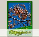 Яблоня Зибольда, 0,5 г (? 13 шт.)