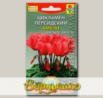 Цикламен персидский Амели, 3 шт.