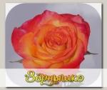 Роза чайно-гибридная ЛЕТО, 1 шт. NEW