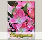 Лилия восточная QUEENFISH, 2 шт. NEW