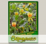 Тюльпанное дерево/Лириодендрон, 0,5 г (? 10 шт.)