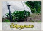 Укрывной материал Агротекс 42 (для укрытия растений) 1,6х10 м