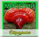 Мицелий зерновой Рейши, 150 мл