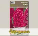 Гиацинт садовый JAN BOS, 5 шт.