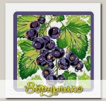 Прихватка Ягоды-фрукты (черная смородина)