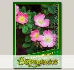 Роза Ржавчинная, 0,5 г (? 20 шт.)
