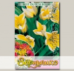 Тюльпан ботанический TARDA DASYSTEMON, 10 шт.