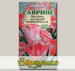 Цикламен персидский Барбаросса, 3 шт.