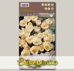 Крокус ботанический CREAM BEAUTY, 25 шт.
