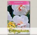 Нарцисс махровый ACROPOLIS, 10 шт. NEW
