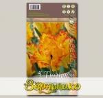 Тюльпан попугайный CARIBBEAN PARROT, 5 шт.