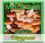 Мицелий зерновой Шиитаке Императорский, 150 мл
