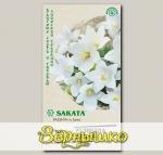 Платикодон крупноцветковый Звезда Белая F1, 5 шт. Sakata