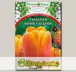Тюльпан простой поздний ЮРИЙ ГАГАРИН, 5 шт. Эксклюзив (Российские гиганты)