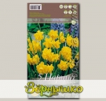 Нарцисс ботанический PENCREBAR, 5 шт.