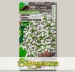 Лобелия ампельная Регатта Жемчужный Водопад, 8 шт. PanAmerican Seeds Ампельные Шедевры