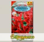 Цикламен персидский крупноцветковый Кристиан, Смесь, 3 шт.