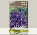 Крокус крупноцветковый FLOWER RECORD, 12 шт.