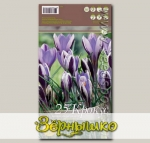 Крокус ботанический SPRING BEAUTY, 25 шт.