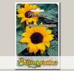 Подсолнечник карликовый Мисс Саншайн, 5 шт. Platinum
