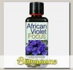 Удобрение для фиалок African Violet Focus, 100 мл