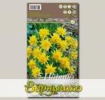 Нарцисс ботанический RIP VAN WINKLE, 5 шт.