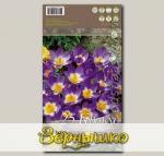 Крокус ботанический SIEBERI TRICOLOR, 25 шт.
