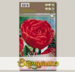 Тюльпан махровый поздний MIRANDA, 8 шт.