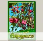 Яблоня Долго, 0,2 г (? 7 шт.)