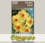 Нарцисс многоцветковый (Танацета) SCARLET GEM, 3 шт.
