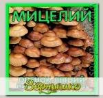 Мицелий зерновой Опенок Летний, 150 мл