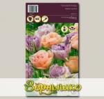 Тюльпан махровый поздний CHARMING BEAUTY/DOUBLE SHIRLEY MIXED, 12 шт.