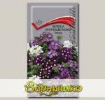Вербена крупноцветковая Тоскана, Смесь, 10 шт.