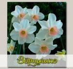 Нарцисс ботанический BELL SONG, 4 шт. NEW