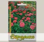 Цинния изящная георгиноцветковая Иллюминейшен Дарк Роз, 50 шт.