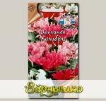 Цикламен персидский Колибри, Смесь, 0,05 г