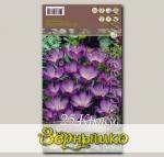 Крокус ботанический RUBY GIANT, 25 шт.