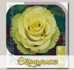 Роза чайно-гибридная ЛИМБО, 1 шт.