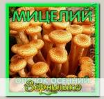 Мицелий зерновой Опенок Осенний, 150 мл