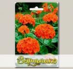 Пеларгония садовая Мэверик Оранж F1, 5 шт.
