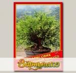 Кипарисовик Горохоплодный «Sungold», 0,2 г