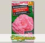 Бегония Пикоти Америгибрид Розовое кружево F1, 5 шт. PanAmerican Seed