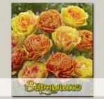 Тюльпан бахромчатый VAYA CON DIOS, 7 шт. NEW