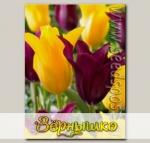 Тюльпан лилиецветный BURGUNDY/INIMITABLE MIXED, 20 шт.