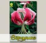 Лилия видовая BLACK BEAUTY, 2 шт. NEW