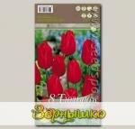 Тюльпан простой ранний MERRY CHRISTMAS, 8 шт.