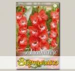 Гладиолус крупноцветковый PRETTY GUY, 7 шт. NEW