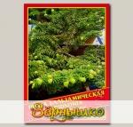 Пихта Бальзамическая «Hudsonia», 3 шт.
